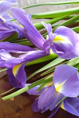 iPhone Wallpaper Iris flowers, bouquet