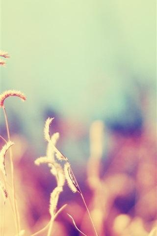 iPhone Wallpaper Nature, grass, blurry background