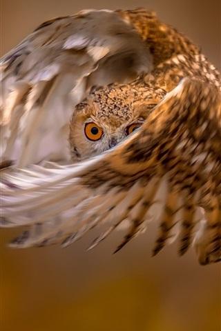 iPhone Wallpaper Owl flight, wings, eye