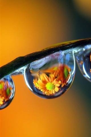 iPhone Wallpaper Plants stem, water drops, reflection, flowers