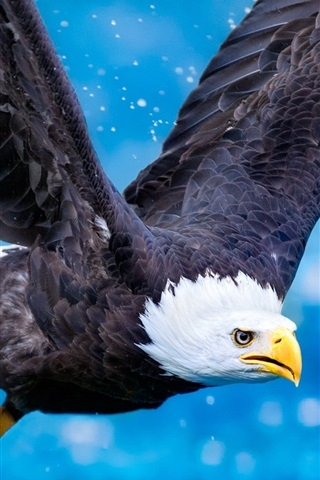 iPhone Wallpaper Predator, eagle flying, wings, blue sky