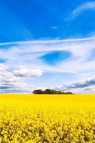 菜の花の畑 美しい景色 1080x1920 Iphone 8 7 6 6s Plus 壁紙 背景 画像