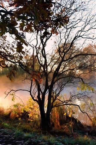 iPhone Wallpaper River, trees, fog, morning, autumn