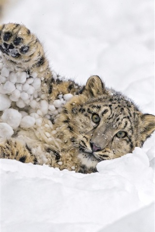 iPhone Wallpaper Snow leopard, play snow, winter