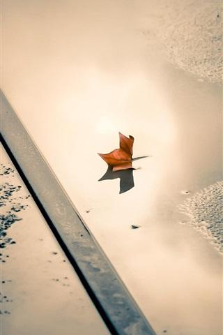 iPhone Wallpaper Street, puddle, leaf