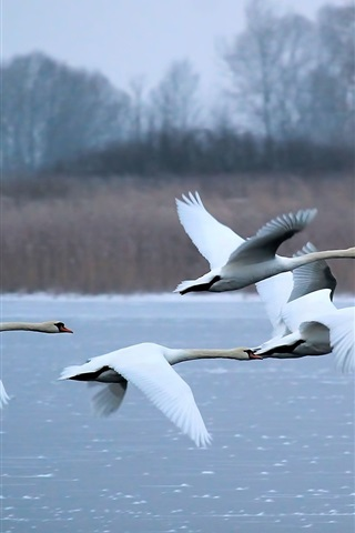 iPhone Wallpaper Swans flying, river