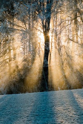 iPhone Wallpaper Switzerland, shadows, forest, trees, snow, sun rays