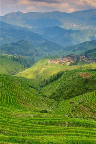 iPhone Wallpaper Terraces, greens, mountains, valley, fog