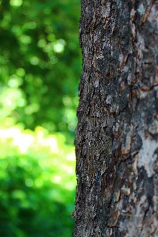 iPhone Wallpaper Tree trunk, macro photography