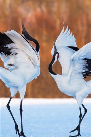 iPhone Wallpaper Two birds, cranes dance