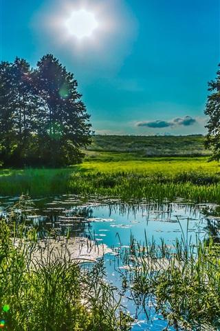 iPhone Wallpaper Ukraine, Poltava, greens, summer, reeds, grass, trees, sun, pond