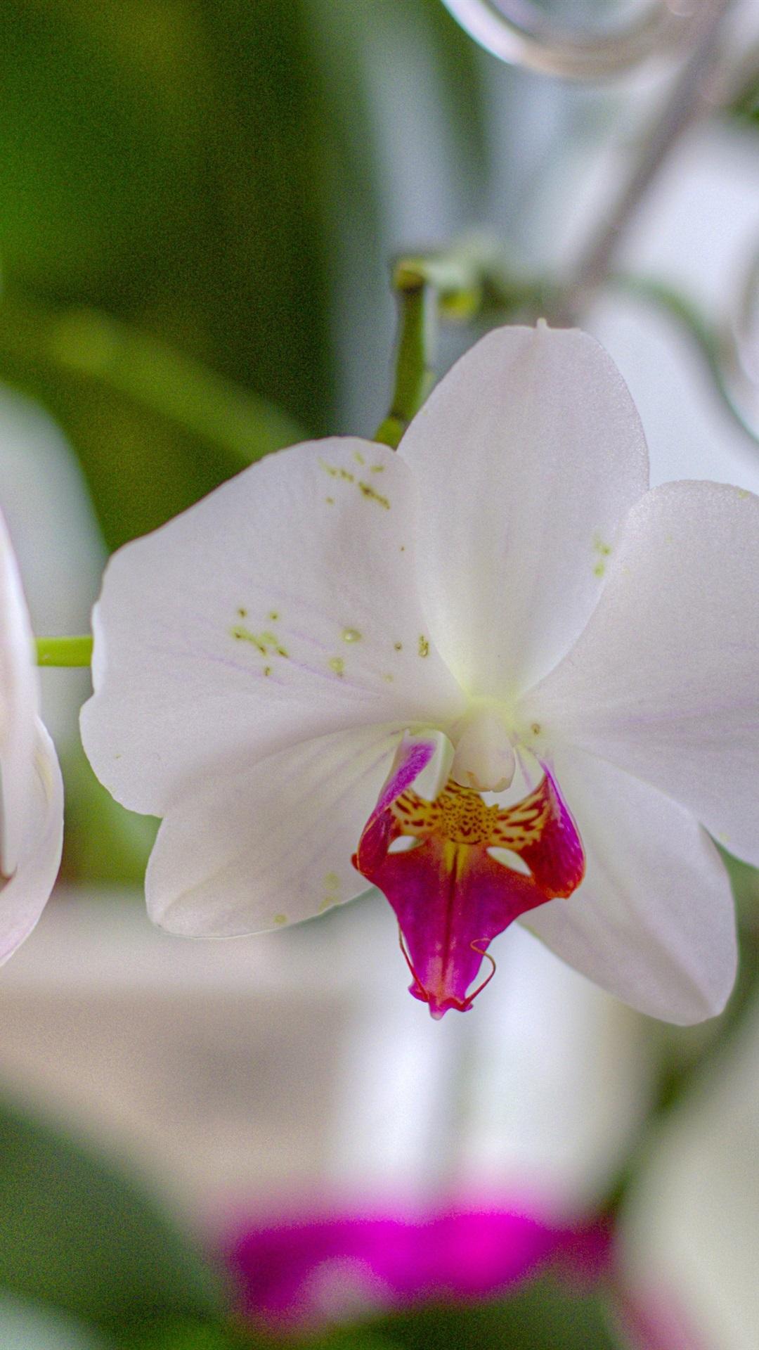Weisse Orchideen Blutenblatter Verschwommener Hintergrund