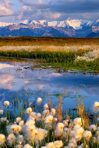iPhone Wallpaper Wildflowers, lake, mountains, clouds