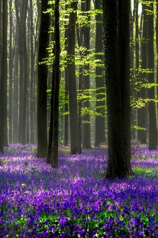 iPhone Wallpaper Beautiful forest, blue flowers