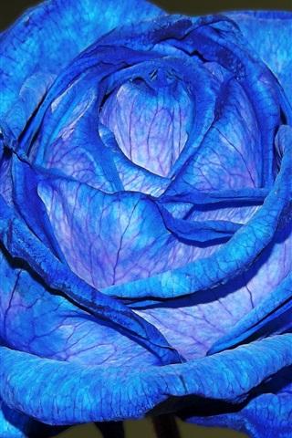 iPhone Wallpaper Blue petals rose close-up