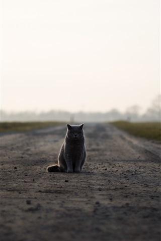 iPhone Wallpaper British cat sit on ground