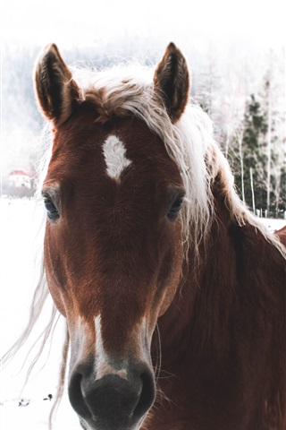 iPhone Wallpaper Brown horse, winter, snow