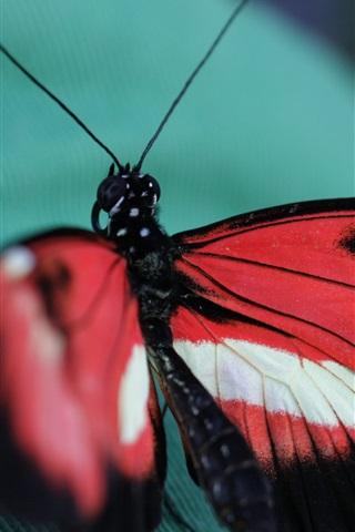 iPhone Wallpaper Butterfly, cloth