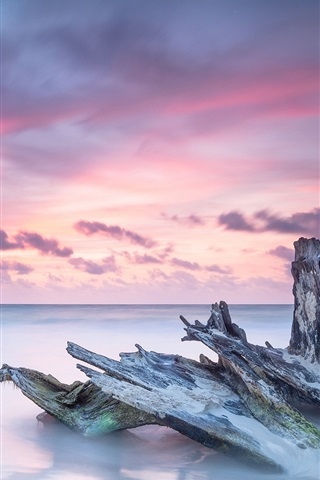 iPhone Wallpaper Caribbean, sea, dead tree trunk, ocean, sunrise