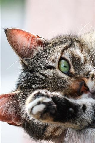 iPhone Wallpaper Cat sleep, paw