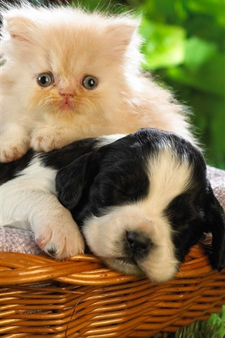 iPhone Wallpaper Dog and cat, basket, friends