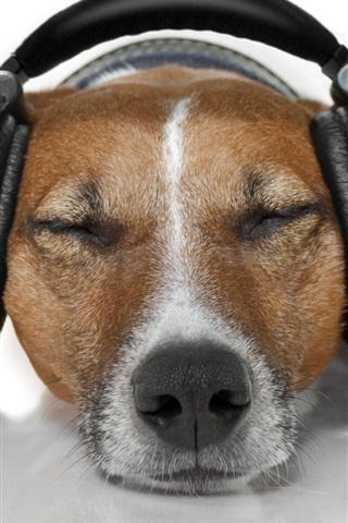 iPhone Wallpaper Dog relax to listen music, headphones, funny animals