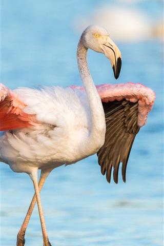 iPhone Wallpaper Flamingo, wings, lake, water