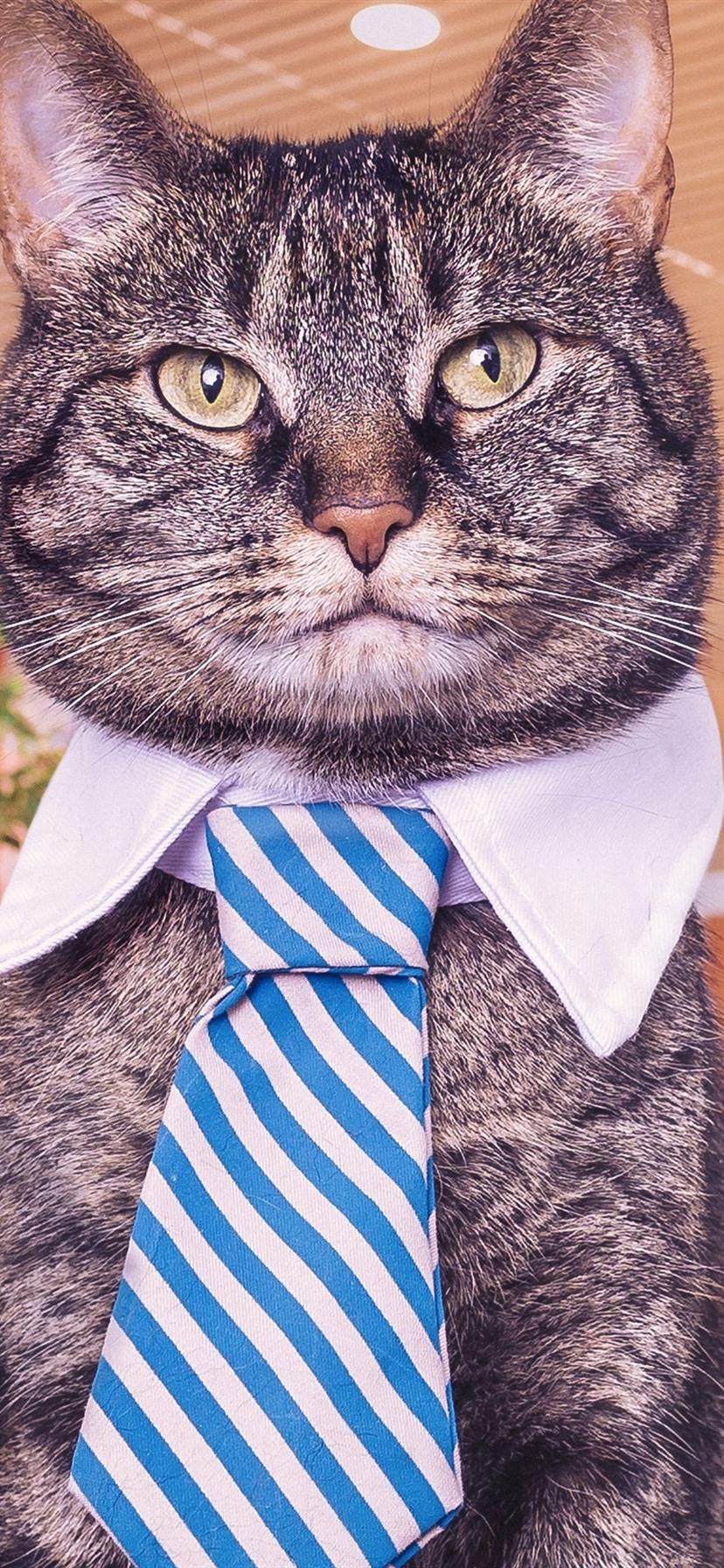 壁紙 面白い猫 ネクタイ 3840x2160 Uhd 4k 無料のデスクトップの背景 画像