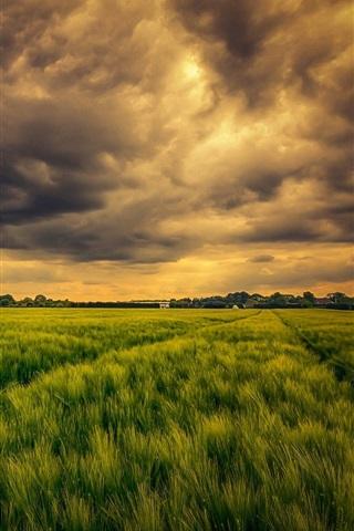 iPhone Wallpaper Green field, clouds, sky, nature
