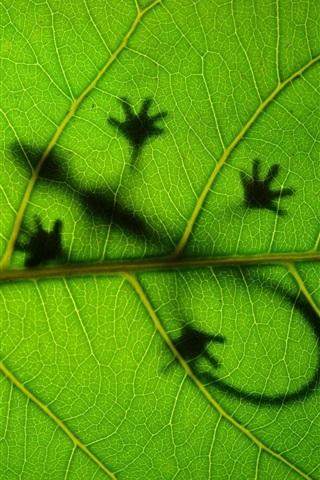 iPhone Wallpaper Green leaf, lizard, shadow