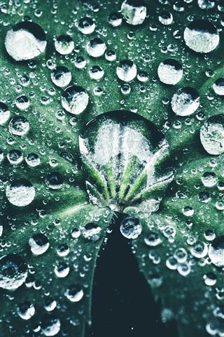 iPhone Papéis de Parede Folha verde, muitas gotas de água