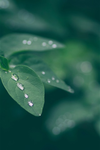 iPhone Wallpaper Green leaves, water drops, bokeh, nature