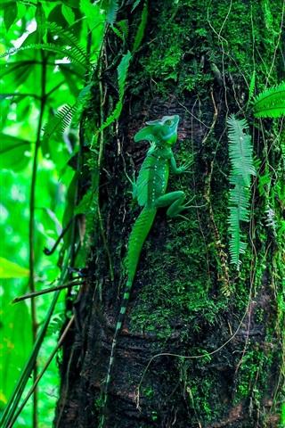 iPhone Wallpaper Green lizard climbing tree, leaves