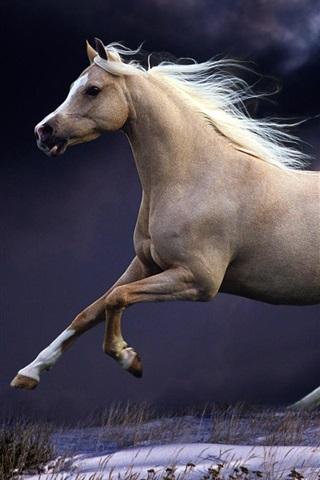 iPhone Wallpaper Horse running, jump, speed