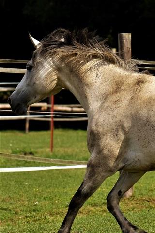 iPhone Wallpaper Horse walk, fence