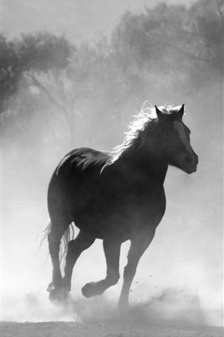 iPhone Wallpaper Horses running, fog, morning