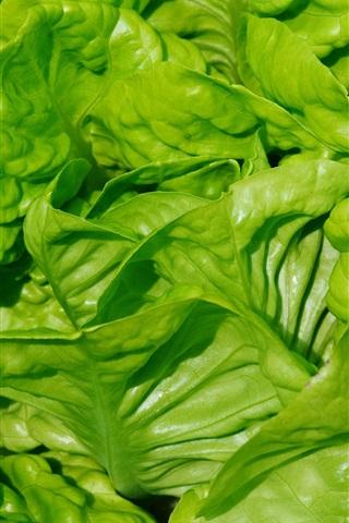 iPhone Wallpaper Lettuce leaves close-up, vegetable