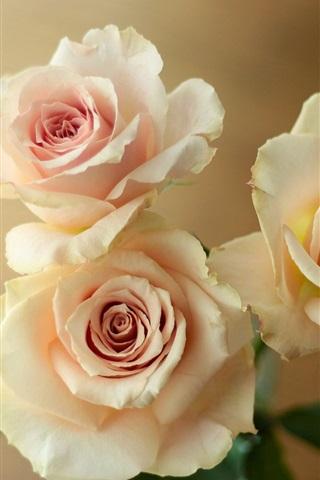 iPhone Wallpaper Light pink roses