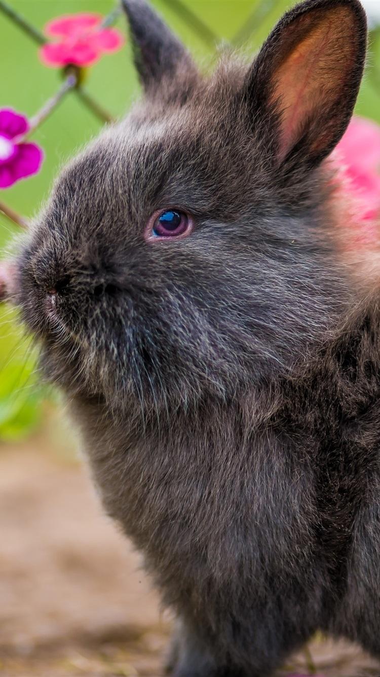 Обои Кролики, Rabbit, осень, листва. Животные foto 13