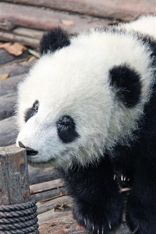 iPhone Wallpaper Panda baby