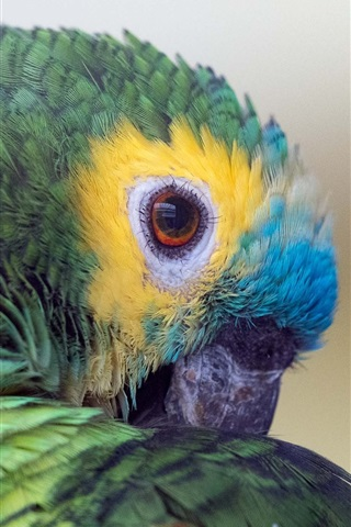 iPhone Wallpaper Parrot, colors feathers, beak, eyes