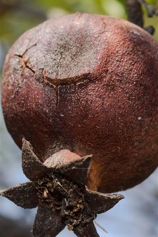 iPhone Wallpaper Pomegranate tree, ripe fruit