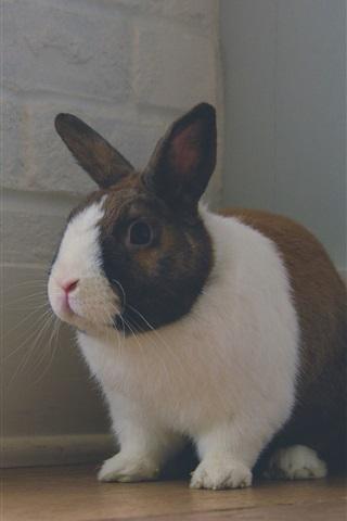 iPhone Wallpaper Rabbit standing in corner