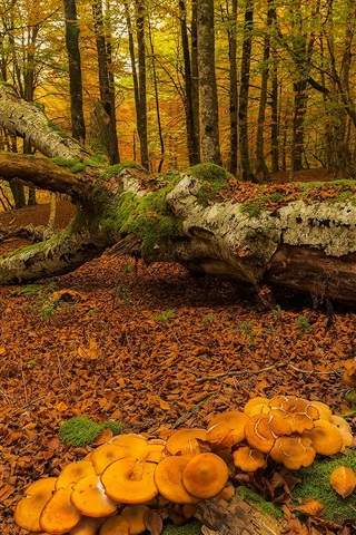 iPhone Wallpaper Spain, Basque Country, autumn, trees, moss, mushrooms