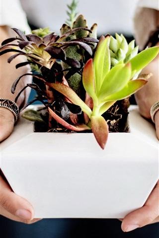 iPhone Wallpaper Succulents in hands, houseplant