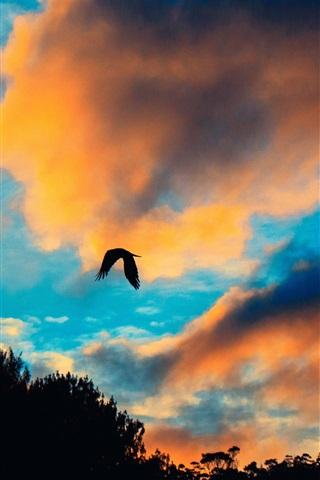 iPhone Wallpaper Sunset, clouds, bird flight in sky