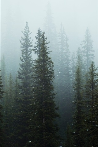 iPhone Wallpaper Trees, forest, fog, morning, snow