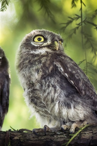 iPhone Wallpaper Two birds, owl, tree