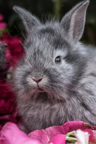 iPhone Wallpaper Two gray rabbits, petals
