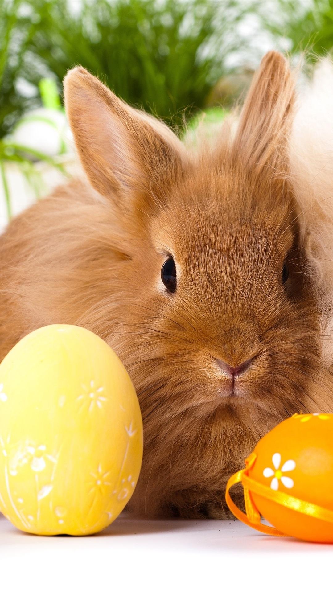 Пасхальный кролик картинки красивые на телефон, картинки поздравления